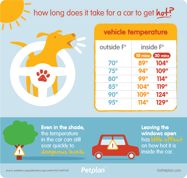 hot-car-temperatures